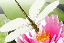 Dragonfly Counselling